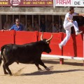 #219. Course Camarguaise: a Photographic Slice of Summer Provence