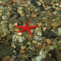 "#263. Every Story Tells a Picture: ""The day I catched a starfish"""