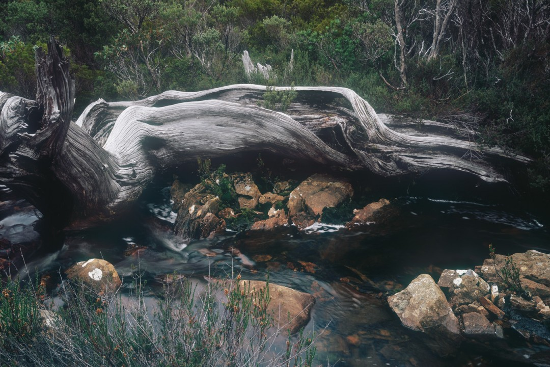 #260. Australian Wilderness: Tasmania's Central Highlands