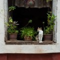 #271. Fontainhas – the Old Portuguese Quarter of Goa: Homes and Streets