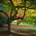 #293. Rich = B*tch? Photo Ethics at Westonbirt Arboretum
