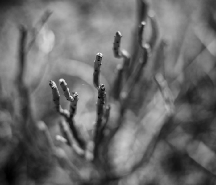 #310. Thorny issues with Flora