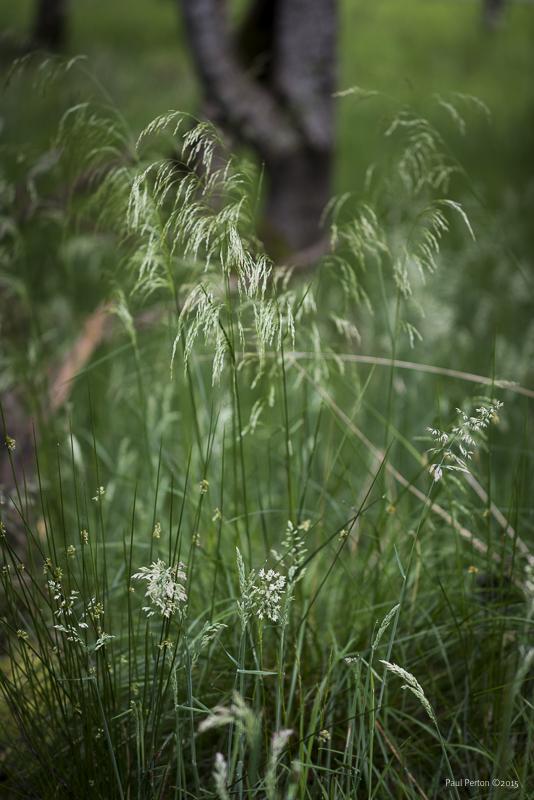 Dewy morning grass