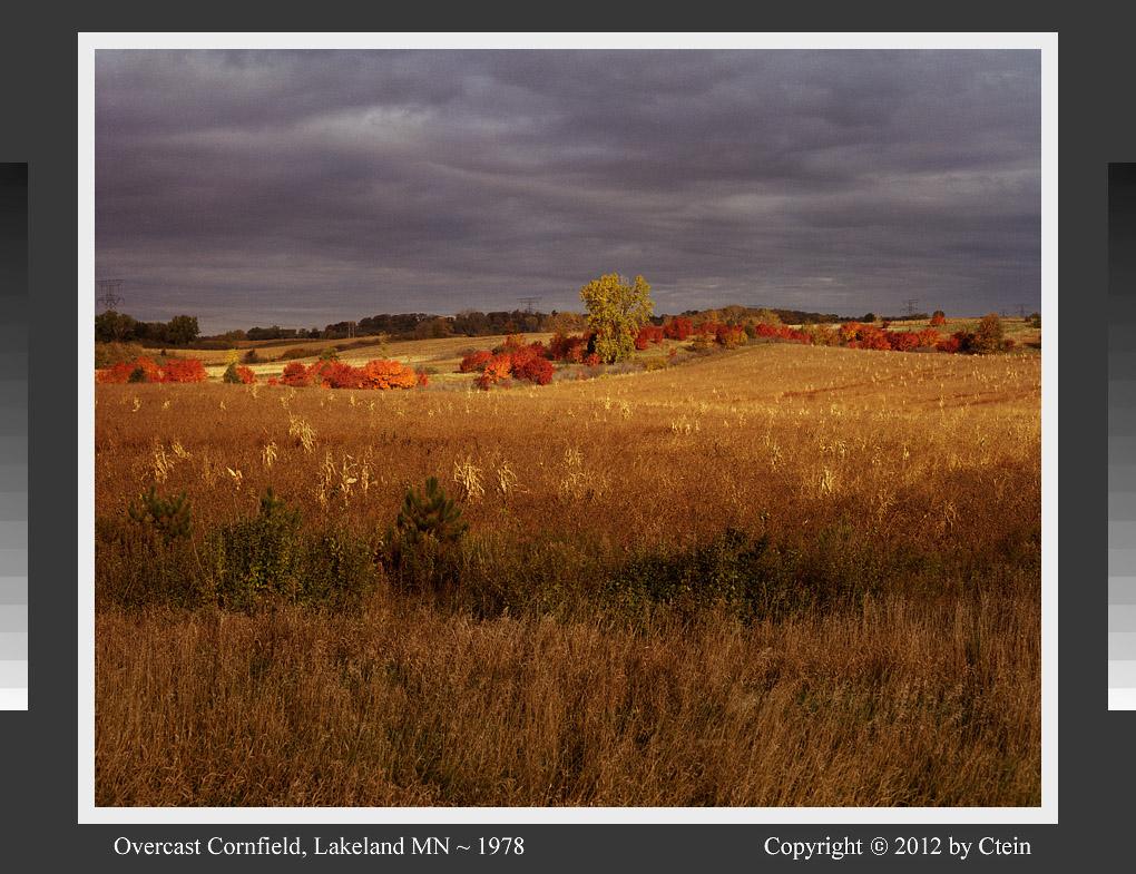 Overcast cornfield (c) Ctein