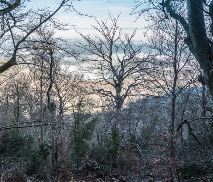 #442. A New Year's Ridge Walk