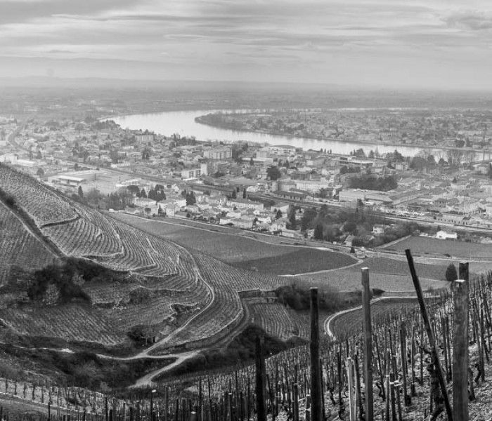 #459. DS HotSpot: The Hills of Tain l'Hermitage (Rhone Valley)