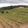 #487. A walk in the Provence vines with a big 28