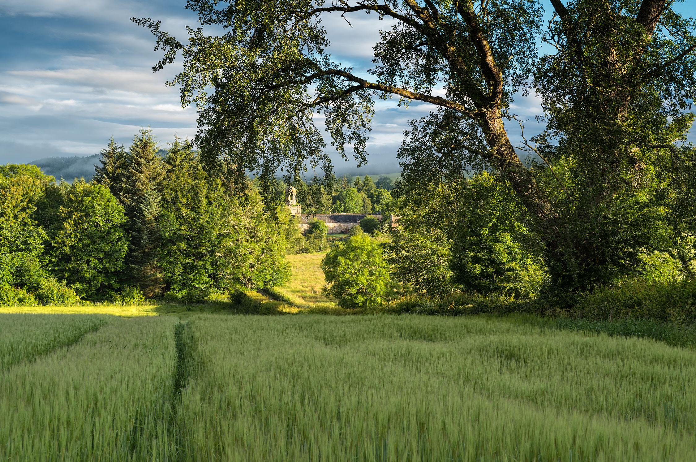 Early Morning Light - Barley Field and Logie Burn Farm, Muir of Ord. Leica S2. Bob Hamilton