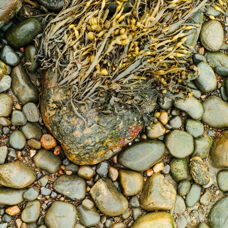 Seaweed at Beauly. Leica M9. Paul Perton