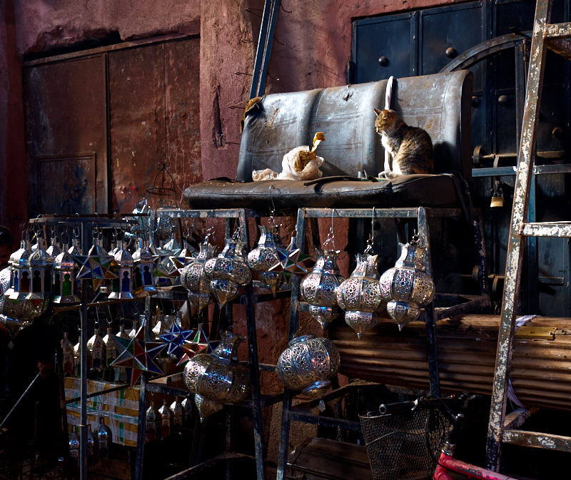 Cat, Metalkworkers souk, Marrakech Medina. Fujifilm 23mm f:4 1:60s.