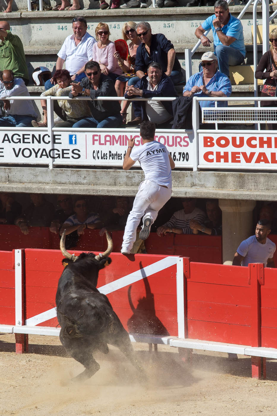 Raseteur Ayme jumps above the red fence, chased by a bull in Lunel bullring