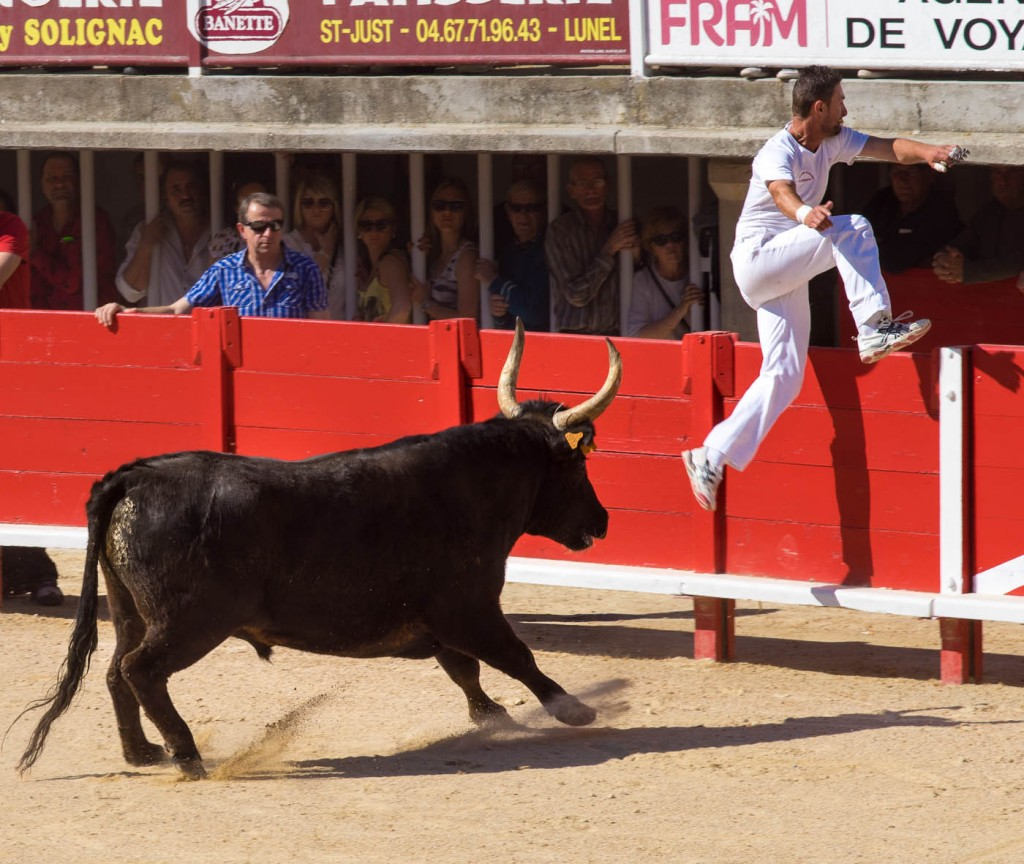 A raseteur runs for cover in front of a bull