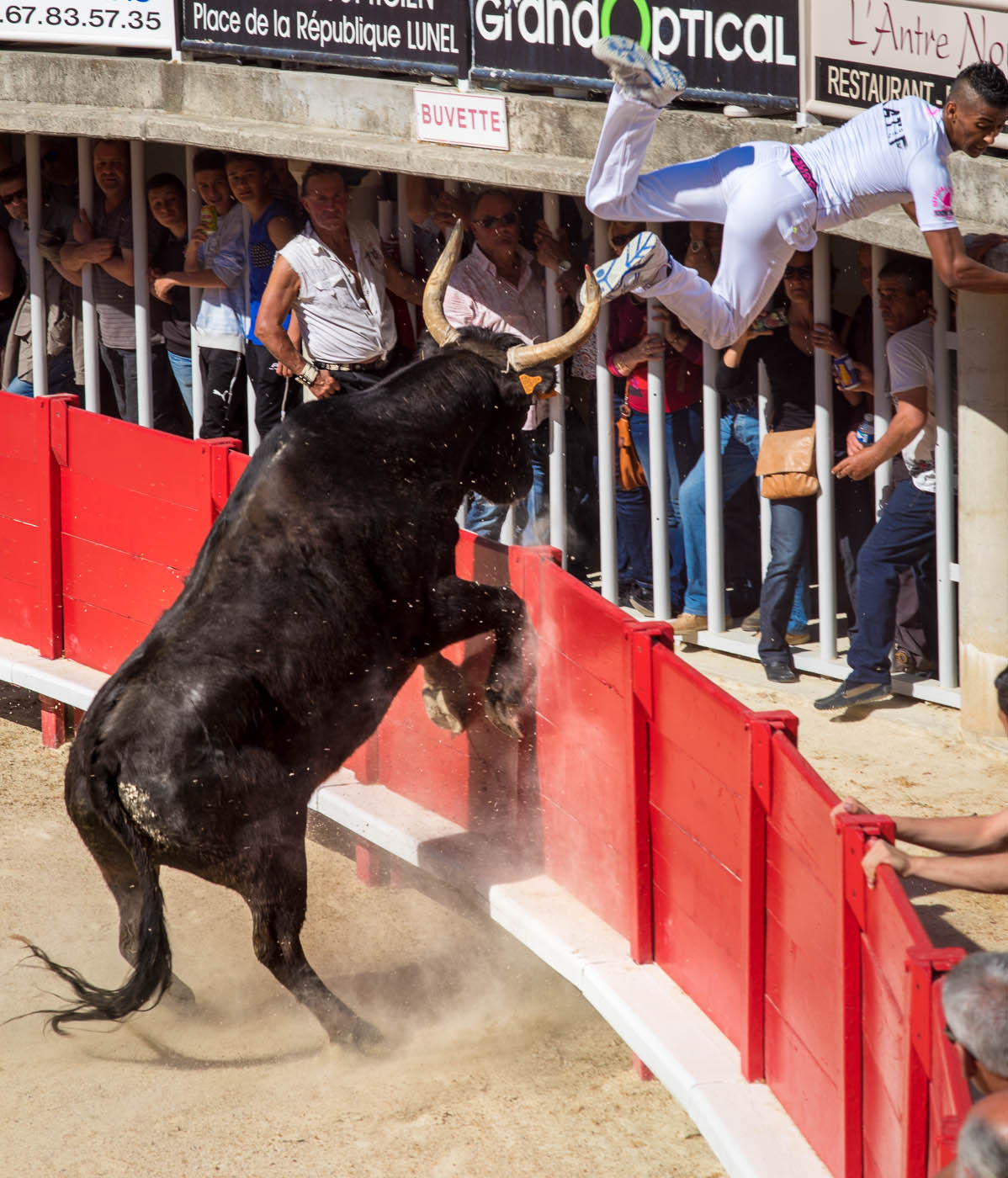 The star raseteur Katif performs spectacular acrobatics to escape a bull in Lunel's course camarguaise