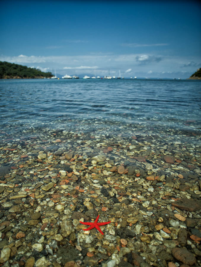 A bright red starfish in the shallow water of the mediterranean sea with yachts and hills in the background