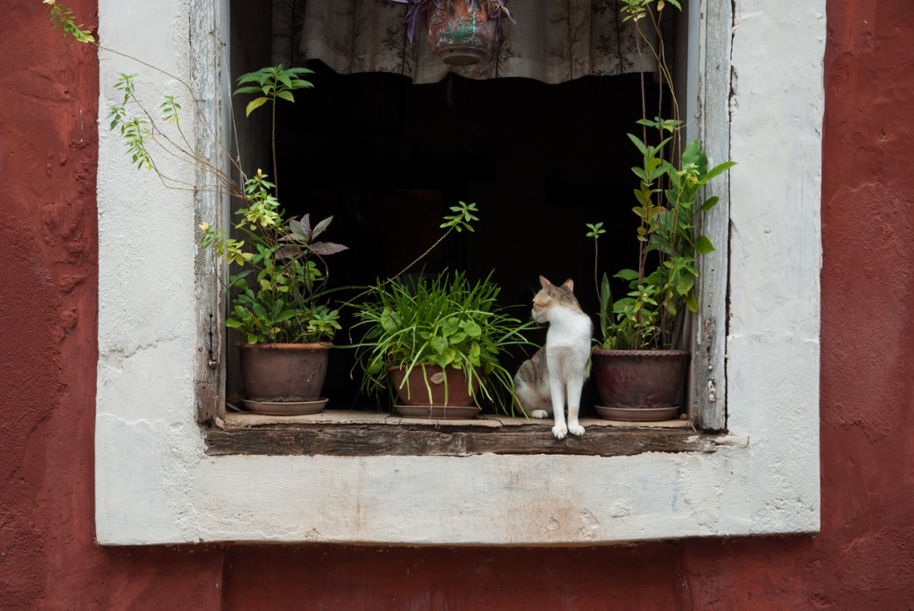 A lonely cat on a Fontainhas window in Goa, India