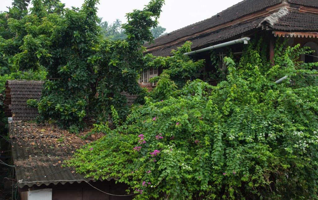 The upper storey of an old mansion becoming overgrown during the monsoon.
