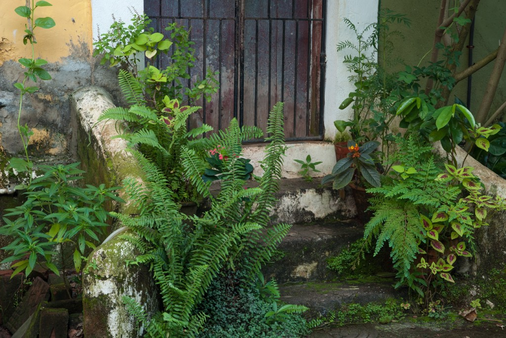Plants growing from pots, drains and rocks in Goa