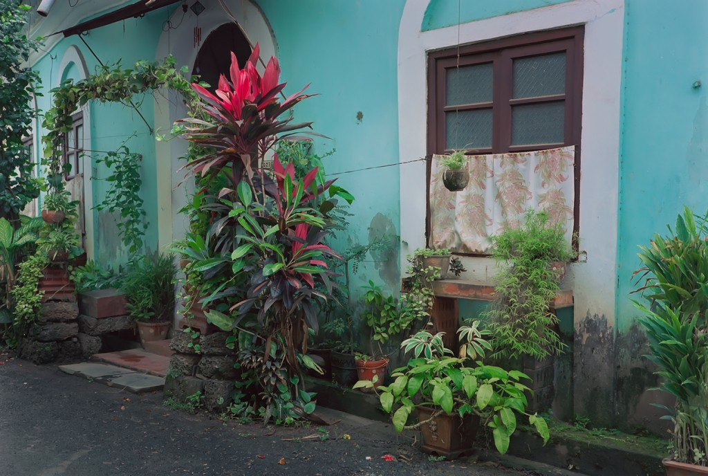 Goans love to adorn their houses with tropical plants