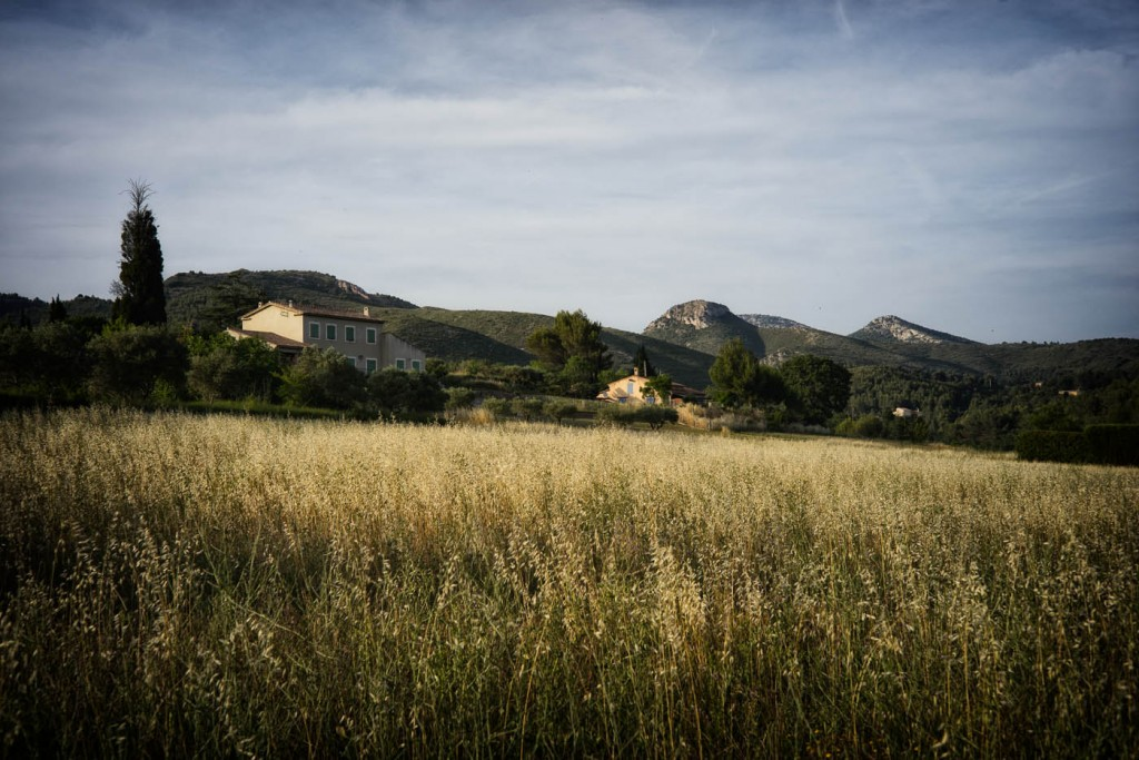 Hay fields in golden light in Provence,Zeiss C-Sonnar 1.5/50 ZM