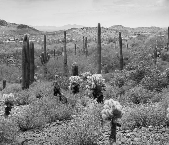 #385. A Black & White walk along Phoenix's Holbert Trail