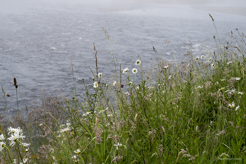 Mist, daisies and cold, clear water