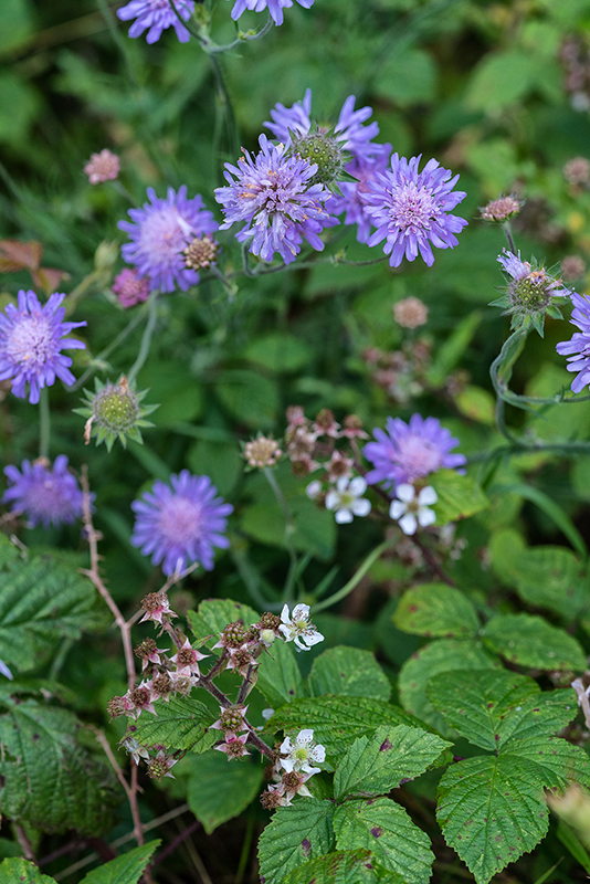 Wild Flowers, Dalzell Estate - Bob Hamilton - A7RII - Sony G FE 90mm f2.8 Macro
