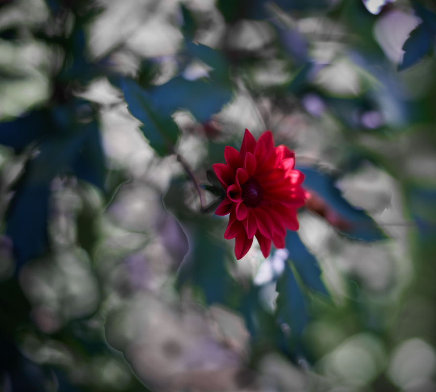 A photo essay in Giverny