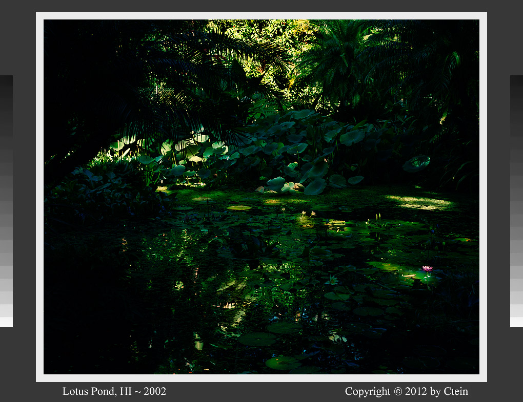 Lotus pond (c) Ctein - Dye Transfer