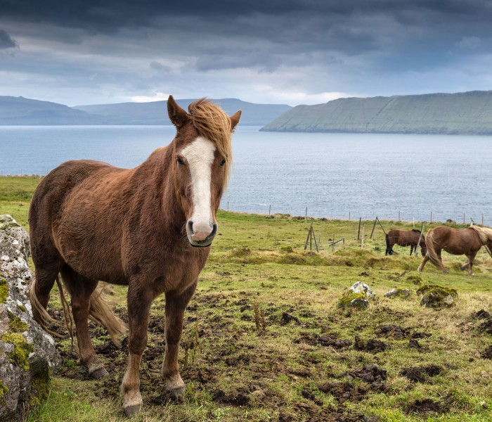 #412. Hiking the Faroe Islands with a Sony A7rII