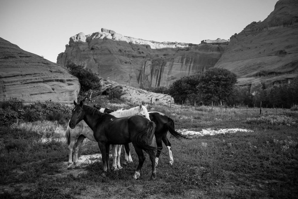 Mustang horses inside a Coral in Canyon de Chelly at dawn