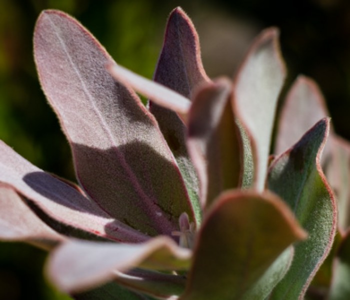 #439. Photographing fynbos and writing the words – take 3