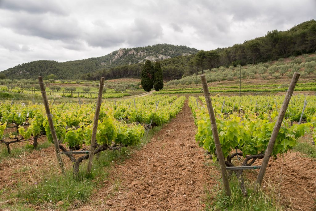 Provence vines and stakes photographed with the Sony A7rII and Zeiss OTUS 28
