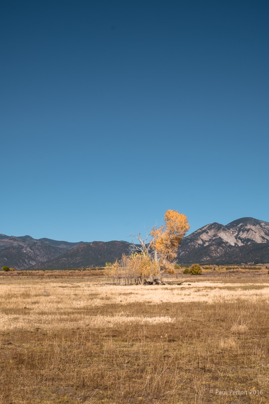 Autumn near Taos