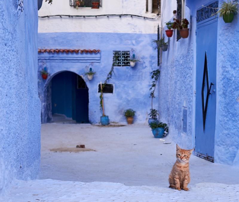 Kitten, Chefchaouen, Morocco. Fujifilm 23mm f:4 1:60s