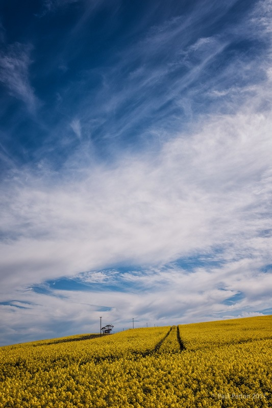 Canola country - Paul Perton