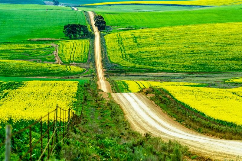 Canola road - Johan Mocke