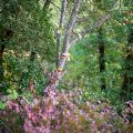 #656. Photographing the autumn colours of Provence