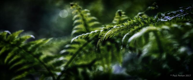 Fern, Speyside - Paul Perton