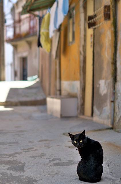 A Street Cat with Desire - Adam Bonn