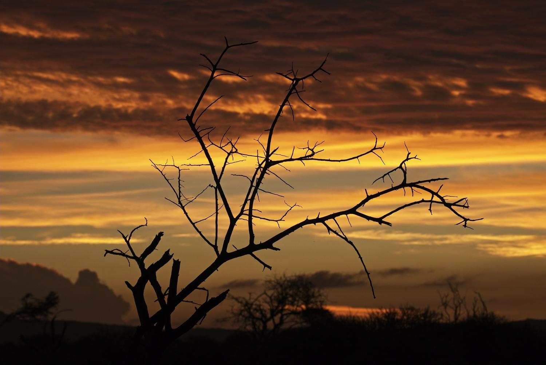 Madikwe sunset