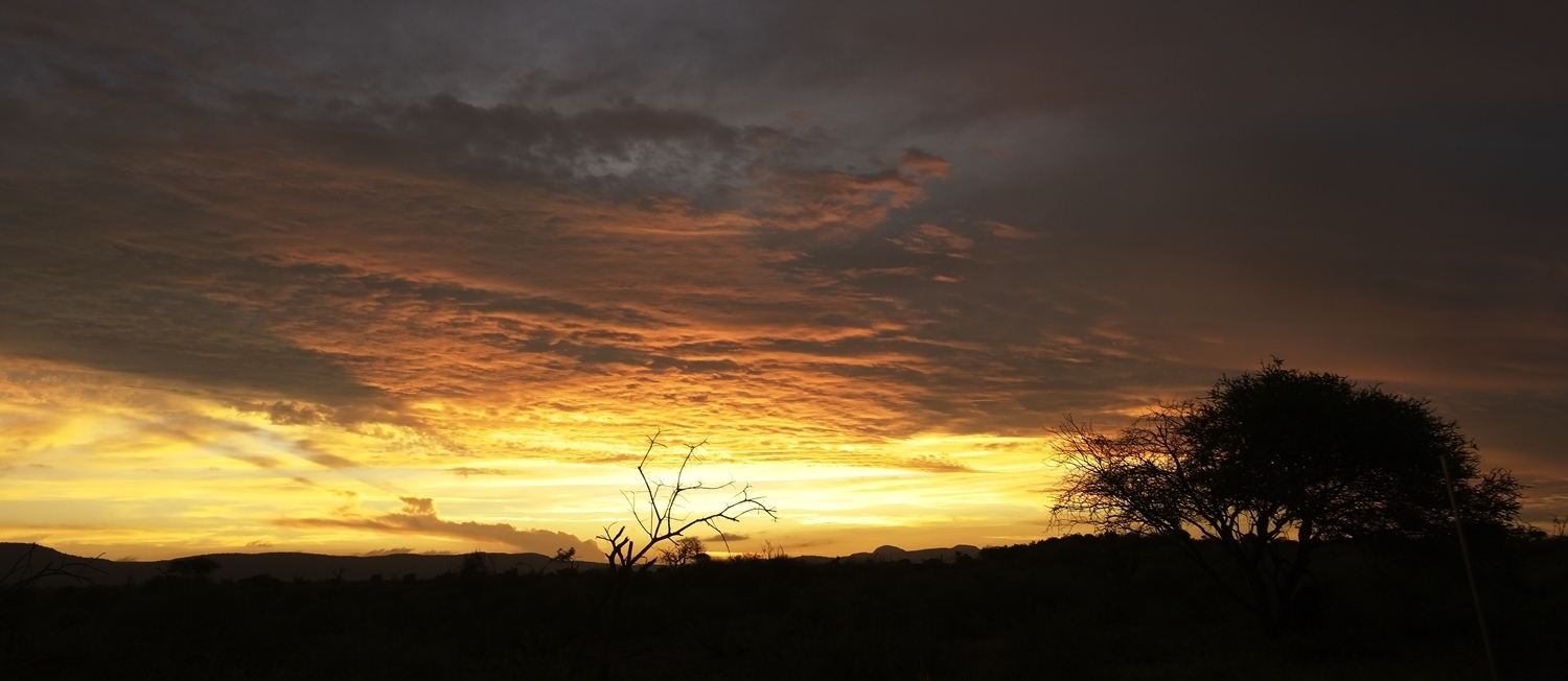 Madikwe sunset
