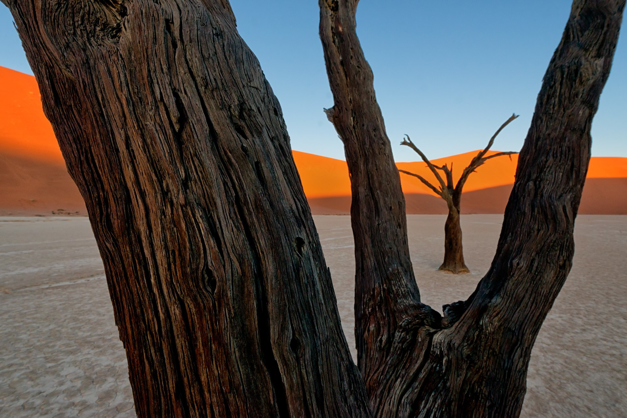 Deadvlei Tree Textures