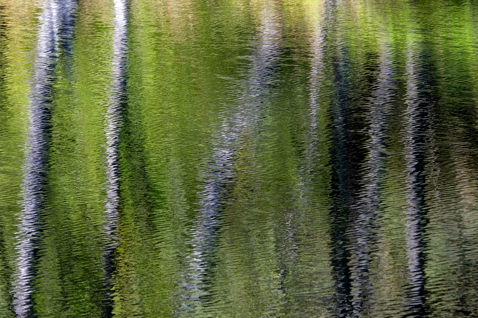 Birch Tree Refections, Loch Katrine, Trossachs, Scotland - XH1 + 50-140mm