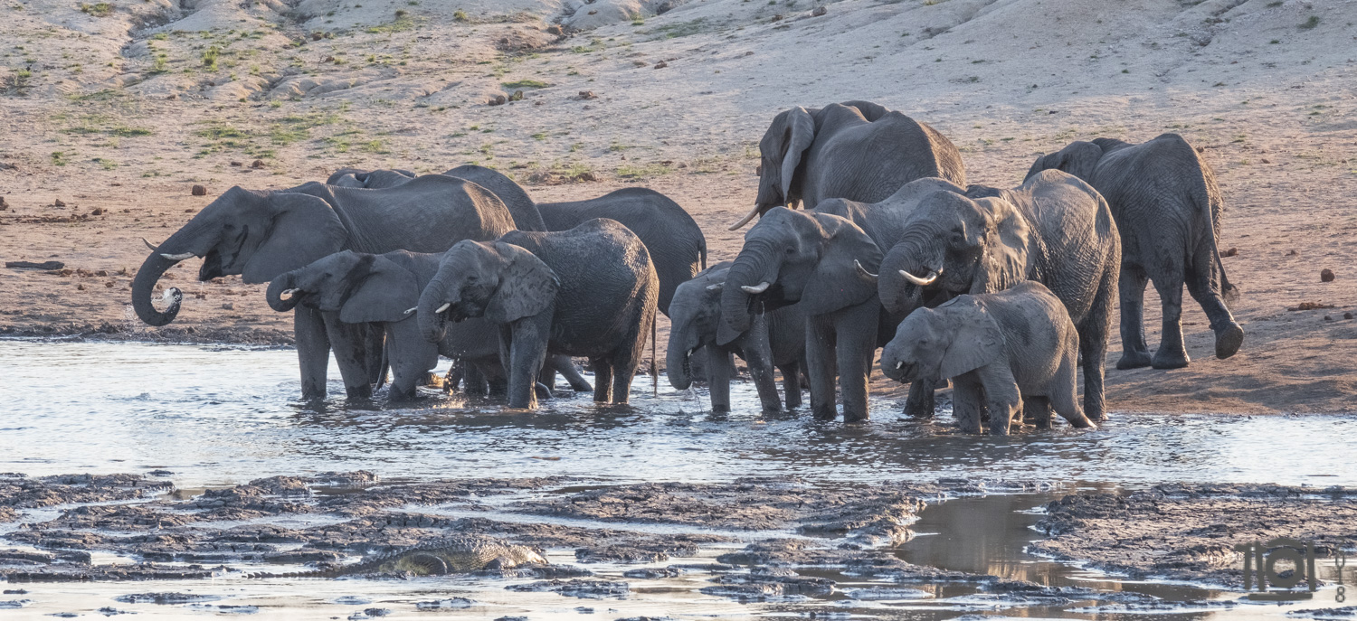 Late afternoon watering hole. Look close and spot the 6m crocodile, waiting for dinner to get just a bit closer...