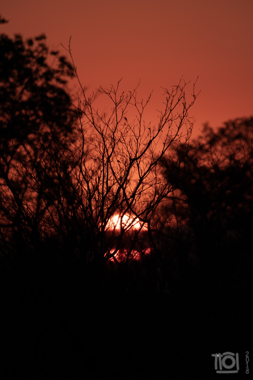 Kruger Park sunset