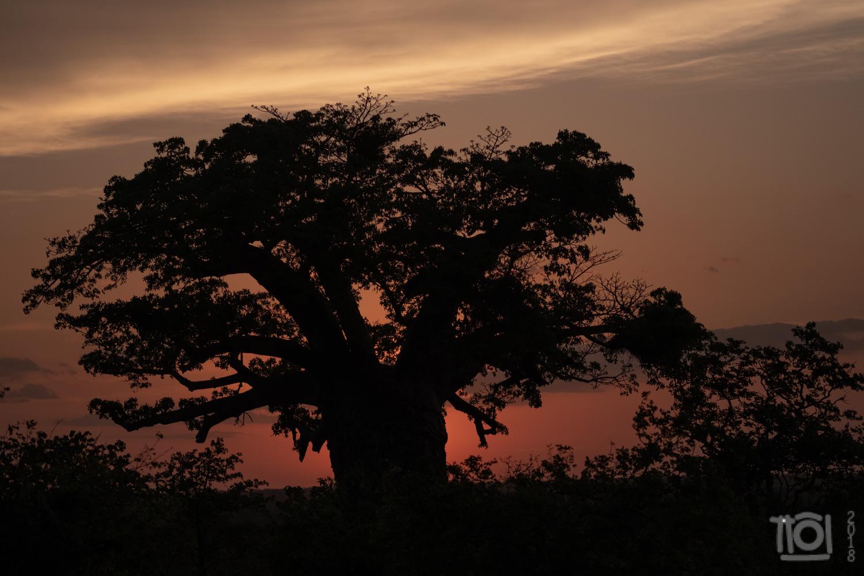 Beobab sunset