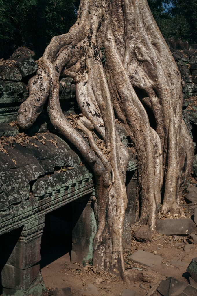 Building overgrown with tree inside Ta Prohm, Angkor